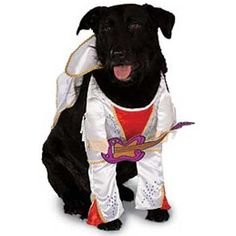 The King, Dog Costume. The guitar is a nice touch!