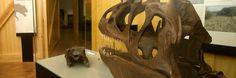 Los dinosaurios te esperan, visita desde el 13 de junio las huellas de los dinosaurios de Enciso (La Rioja) y dejate sorprender.