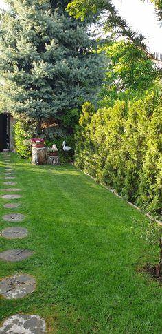 Stepping Stones, Sidewalk, Outdoor Decor, Home Decor, Walkway, Homemade Home Decor, Decoration Home, Walkways, Interior Decorating