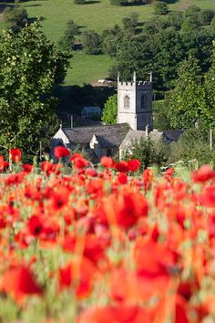 Poppy field and St. Andrews Church, Naunton, Cotswolds, Gloucestershire, England, United Kingdom, Europe