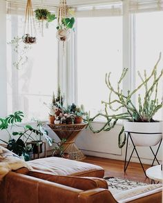 """west elm auf Instagram: """"A home tour you definitely don't want to miss. Explore @chyparker's indoor jungle on our blog! #mywestelm #interiors"""""""