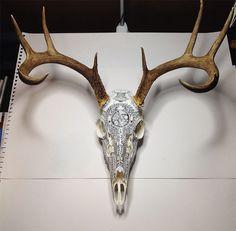 Deer skull with illustrations