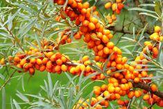A 12 leghatásosabb gyógynövény   Mindmegette.hu Vegetables, Plants, Vegetable Recipes, Plant, Veggies, Planets