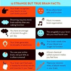 Fascinating facts about the human brain: stress alters brain cells and function; your brain can& feel pain; you have an average of thoughts a day. Brain Science, Brain Food, Your Brain, Science Facts, Science Education, Social Science, Neuroplasticity, Neuroscience, Weird Facts