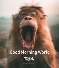 Don't forget to enjoy your beautiful morning! Good Morning World, Good Morning Picture, Good Morning Images, Lazy Morning, Morning Pictures, Fun Facts About Animals, Animal Facts, Animal Quotes, Wildlife Photography