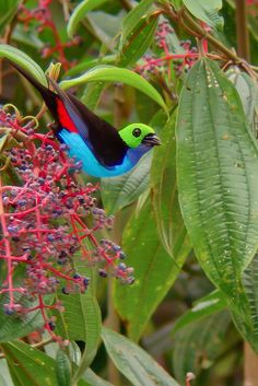 Beautiful multi-colored bird.