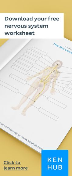 Struggling to learn the of the Start improving your knowledge right away with our handy worksheets. Nervous System Diagram, Nervous System Anatomy, Human Body Anatomy, Facial Anatomy, How To Study Anatomy, Anatomy Flashcards, Nursing Study Tips, Facial Bones, Peripheral Nervous System