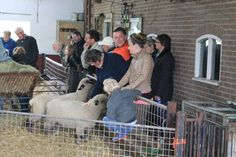 Open dag 2012 Sheep, Cart, Covered Wagon, Strollers