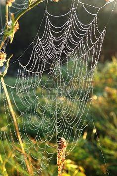 cobweb with dew on plants