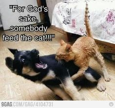 Feed the cat funny cute animals dogs cats animal pets lol humor funny animals Funny Animal Pictures, Dog Pictures, Funny Animals, Cute Animals, Baby Animals, Funny Photos, Meme Pics, Funniest Animals, Animal Pics