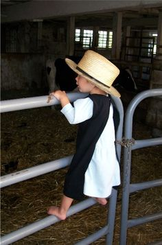 Amish child on gate. The children manage to make a good time of being out in the barn