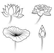 Ensemble de vecteur dessiné à la main des fleurs de Lotus et de feuilles. Stock…