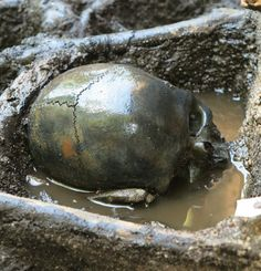 """Remains:  #Skeletal #remains of """"Bog Army"""" found in Denmark. A mass grave containing skeletal remains from more than 1,000 warriors, who were killed in battle some 2,000 years ago, have been discovered in a Danish bog."""