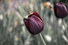 New free stock photo of flower macro flora