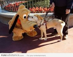 A guide dog meeting Pluto at Disneyland