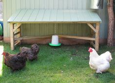 Chicken and Feed Rain Shelter