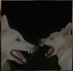 Anatomy Reference, Art Reference, Fear Of Dogs, Scary Dogs, Dog Teeth, Go To Sleep, Dog Art, Mammals, Art Inspo