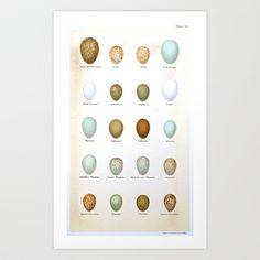 Vintage+Bird+Eggs++Art+Print+by+Vintage+Avenue++-+$17.00