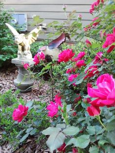 knockout roses. They smell so wonderful and bloom so beautifully. <3