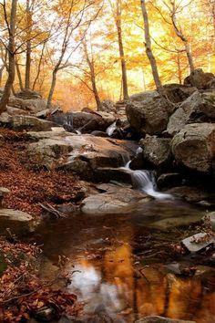 Celebrate Each New Day Nature Landscape, Landscape Photos, Landscape Photography, Fall Nature Photography, Nature Images, Nature Pictures, Beautiful Pictures, Fall Pictures, Pictures To Paint