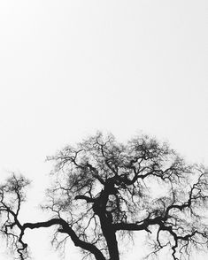 silhouette of bare tree photo – Free Black-and-white Image on Unsplash White Oak Tree, Old Oak Tree, Free Black, Black And White, Image Resources, Free High Resolution Photos, Texture Images, Bare Tree, Photo Tree
