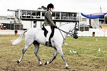 The Australian Pony is a breed of pony that developed in Australia. It was greatly influenced by the native British breeds, especially the Welsh Pony, as well as some Arabian bloodlines.