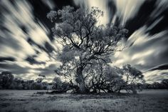 Majestic old Tree by Harry Mellos on 500px