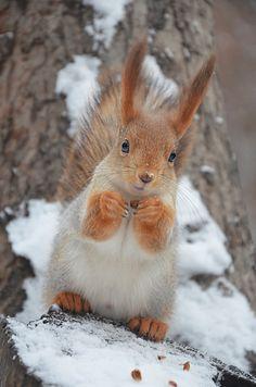 Cute Squirrel, Squirrels, Squirrel Pictures, Tier Fotos, Patterns In Nature, Forest Animals, Chipmunks, Cute Baby Animals, Pet Birds