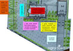 Zielonym od linijki - ogród Ivony - strona 130 - Forum ogrodnicze - Ogrodowisko