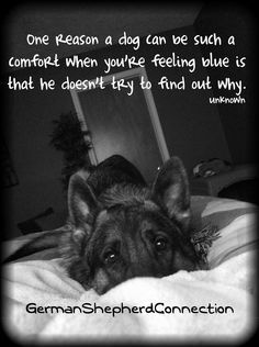There is something so comforting about the quiet, unquestioning love of a German shepherd!