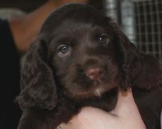 "How can you not say, ""Awwwwww!!!""  From Covey Flush Kennels"