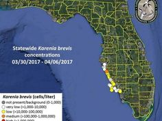 Red Tide Fish Kills Reported Along Central Gulf Coast