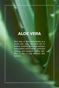 More than just a self-tanner, Svelta Tan Skin Perfecting Self-Tanner contains aloe vera. Simutaneously hydrate, heal and soothe skin. #aloe #svelta #sveltatan #hydrate #natural #smooth #health #beauty #aloevera