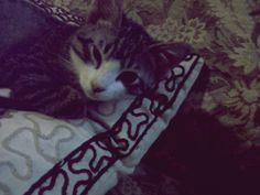 cat lovely#