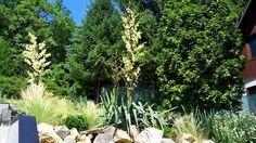 3 Strony Świata Yucca Filamentosa, Plants, Plant, Planets