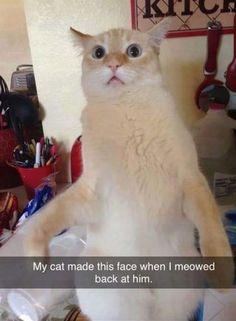 When I Meowed at my Cat - Funny Animals with Captions LOL