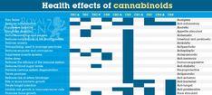 Effetti sulla salute dei cannabinoidi THC e THC