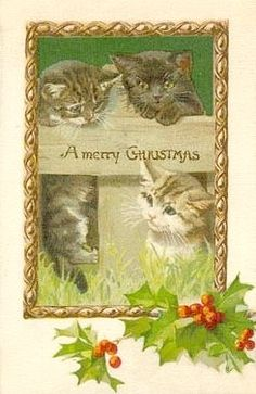 .cat card