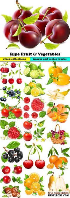 Zöldségek, gyümölcsök és bogyók - vektor | Zöldségek, gyümölcsök és bogyók vektor
