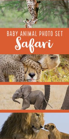 This Safari-themed baby animal photo set by Suzi Eszterhas celebrates the African plains and will surely inspire your kids to love wildlife. It is perfect for your playroom or nursery decor!