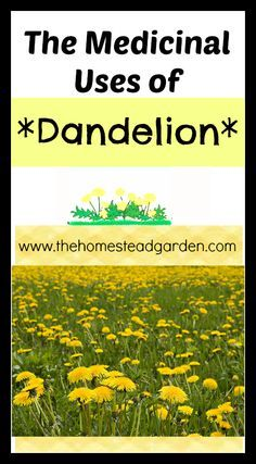 Medicinal Uses of Dandelion - The Homestead Garden~ this is great bc we have a million of these in the yard.