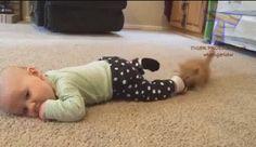 Kitten Stole a Sock