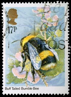 British postage stamp featuring buff-tailed bumble bee watercolor by Gordon Beningfield, 1985 Uk Stamps, Postage Stamp Design, I Love Bees, Bee Art, Vintage Stamps, Bee Happy, Save The Bees, Fauna, Mail Art