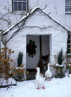 Cottage in the Snow - Let's Hope the Geese were not Christmas Dinner! Noel Christmas, Country Christmas, Winter Christmas, All Things Christmas, Christmas Vignette, Christmas Lunch, Winter Szenen, I Love Winter, Winter Magic