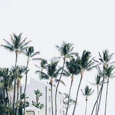 Hawaiian dream // via @masonrosephoto