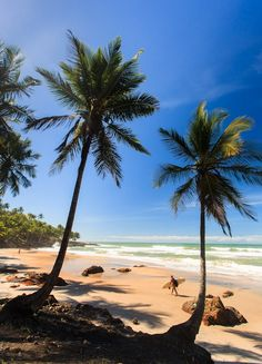 Praia Jeribucaçu - Itacaré, Bahia, Brasil  (by Tom Alves) www.facebook.com/loveswish