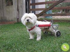 Murphy, il cane che cammina con le ruote