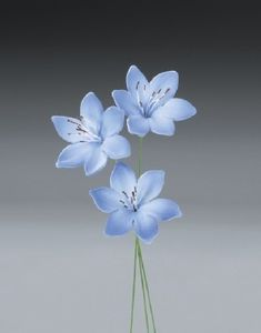 18 Agapanthus Gum Paste Flowers for Weddings and Cake Decorating - Ships Insured