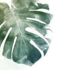 Monstera Leaf Art Print in Detail