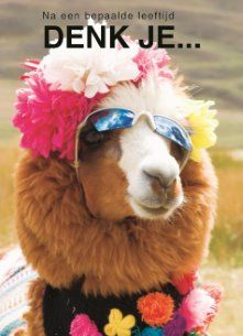 Shop Alpaca, Pachacoto, Cordillera Blanca, Ancash Poster created by theworldofanimals. Personalize it with photos & text or purchase as is! Animal Close Up, My Animal, Alpacas, Birthday Wishes, Happy Birthday, Animals And Pets, Cute Animals, Cute Llama, Llama Alpaca